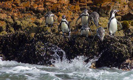 paracas-peru-pinguinos