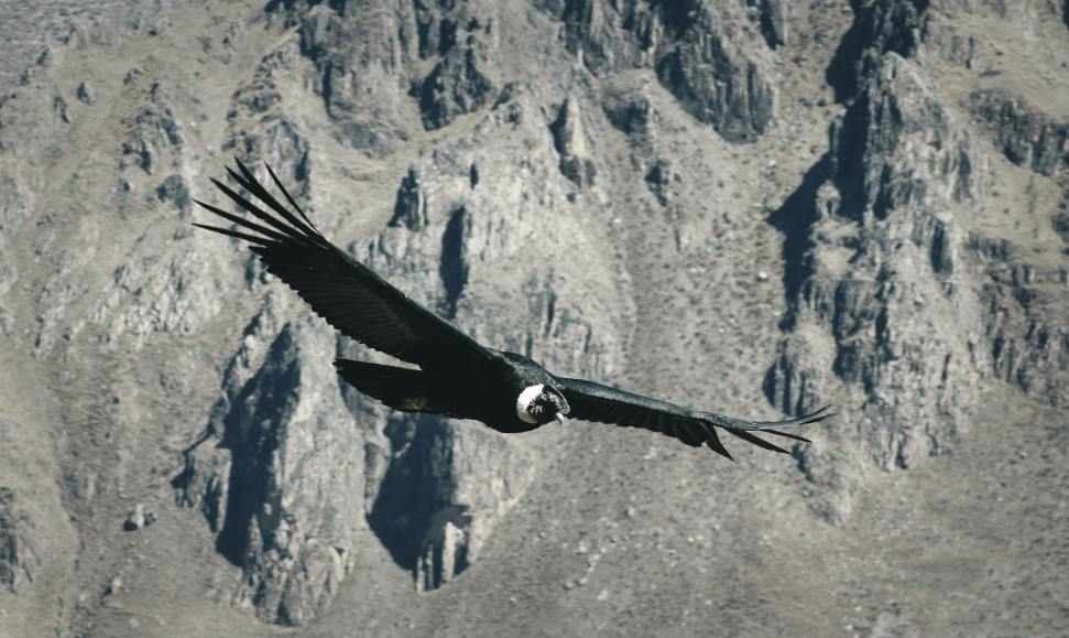 condor arequipa tour