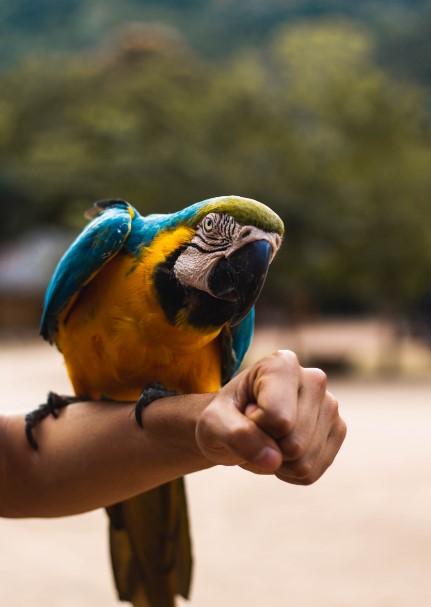 selva fauna peru